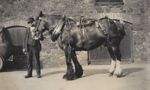 WW Petherick & Sons' carthorse, Lower Wharf, Bude