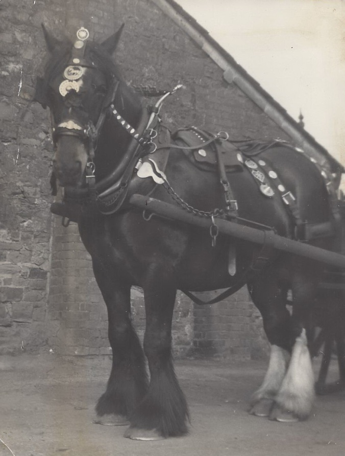 02. Shire horse, WWPetherick, Lower WHarf, Bude
